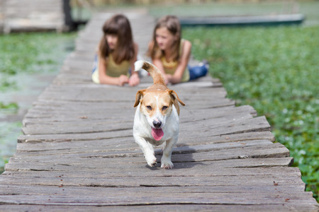 endear: Mixed race dog with tongue out in the forefront and two girls in background