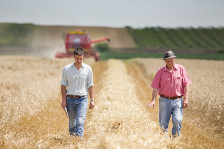 agriculture landscape: Peasant and business man walking on wheat field during harvesting Stock Photo