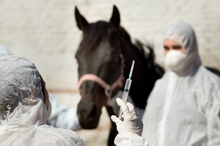 immunize: Veterinarians with masks giving vaccine to the horse