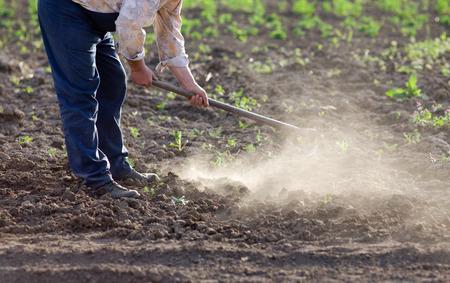 agricultor: Granjero mayor cavando huerta en primavera