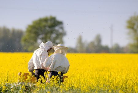 Apiarists working in rapeseed field in springtime