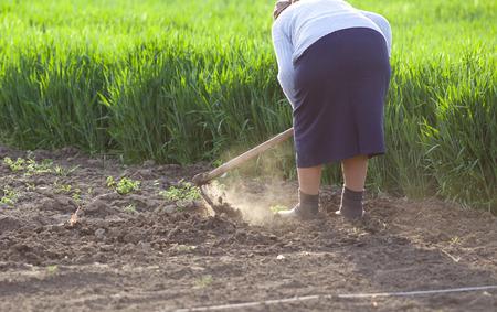 hoeing: Senior woman hoeing vegetable garden in springtime Stock Photo