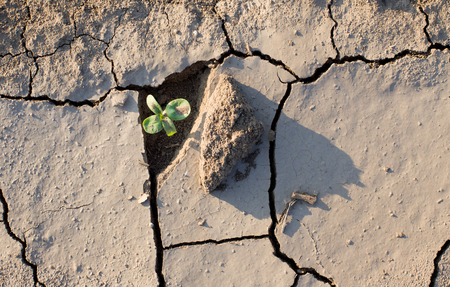 Sprout fighting for life with natural forces in dried cracked mud