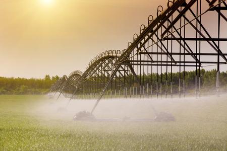 Moderne landwirtschaftliche Bewässerung Spritzen im Weizenfeld Standard-Bild - 39579252