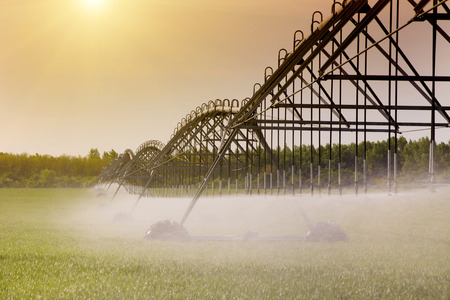 Modern agricultural irrigation system spraying in wheat field Archivio Fotografico