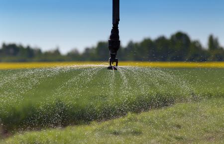 pivot: Close up of irrigation pivot system splashing water in wheat field