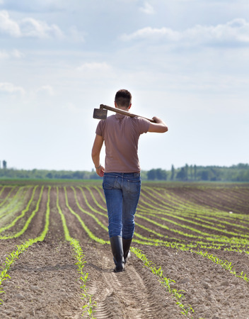 back hoe: Rear view of young farmer carrying hoe on shoulders in corn field in spring Stock Photo