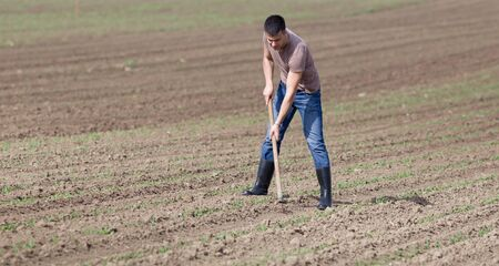 hoeing: Young farmer hoeing weeds in corn field in spring Stock Photo