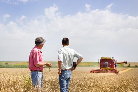 agricultor: Campesino y el hombre de negocios que habla en campo de trigo durante la cosecha de trigo