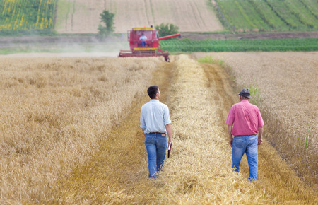 agriculture industrial: Peasant and business man walking on wheat field during harvest Stock Photo