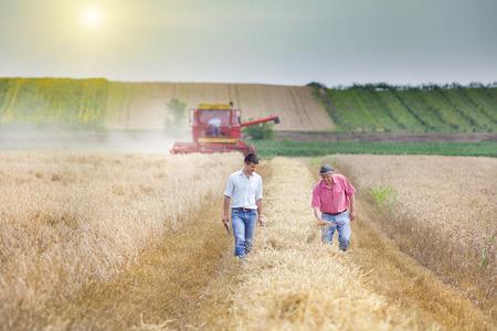 Boer en zakelijke man lopen op tarwe veld tijdens de oogst Stockfoto
