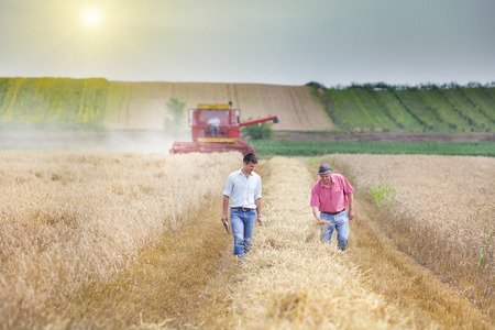 to field: Peasant and business man walking on wheat field during harvest Stock Photo