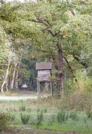 watchtower: Forest landscape, wooden watchtower in oak woods