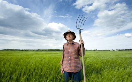 hayfork: Old farmer with hayfork standing in green barley field in spring