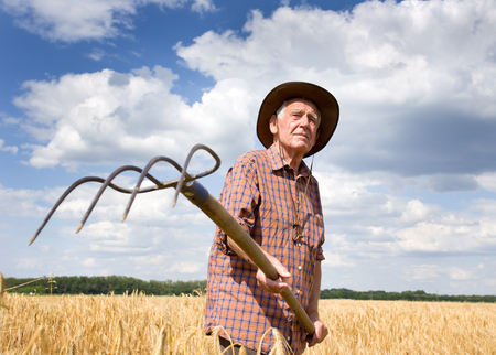 conceived: Old man farmer working in barley field in summer time, blue sky with white clouds in background