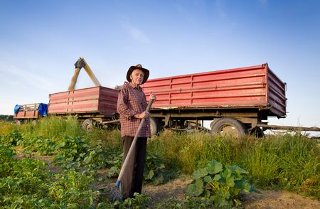 hayfork: Senior peasant with hayfork standing on the field in front of combine harvesting corn