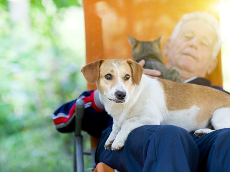 lap: Senior man lying in sunbed in courtyard while dog and cat sitting in his lap