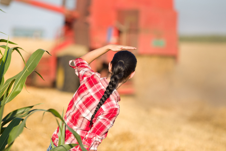 plaid shirt: Young woman in plaid shirt standing in wheat field and looking at combine during harvest