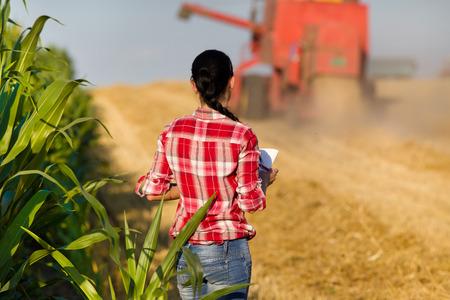 chemise carreaux: Jeune femme en chemise � carreaux debout dans un champ de bl� et en regardant combiner pendant la r�colte Banque d'images