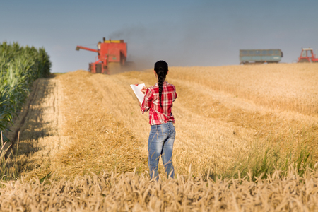 harvest field: Young woman in plaid shirt standing in wheat field and looking at combine during harvest
