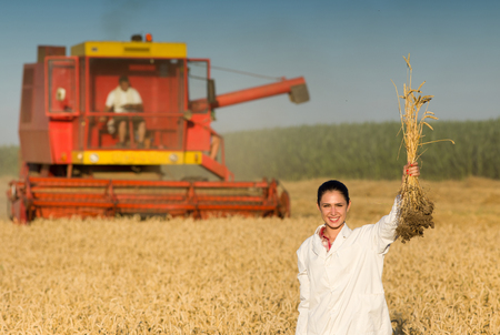 agronomist: Smiling young woman agronomist with raised wheat stalks standing in front of combine harvester in golden field