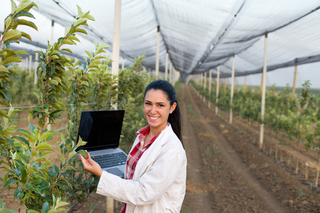 Young woman agronomist with laptop standing beside apple tree in modern orchard with anti hail net