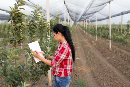 Young woman agronomist standing beside apple trees in modern orchard with anti hail net