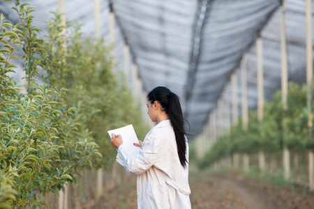 Young woman agronomist writing notes beside apple trees in modern orchard with anti hail net