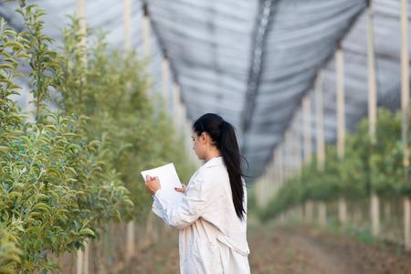 agricultura: Mujer escribir notas agrónomo jóvenes junto a los árboles de manzana en el huerto moderno con mallas contra el granizo
