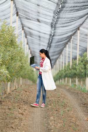 agronomist: Young woman agronomist working on laptop  beside apple trees in modern orchard with anti hail net