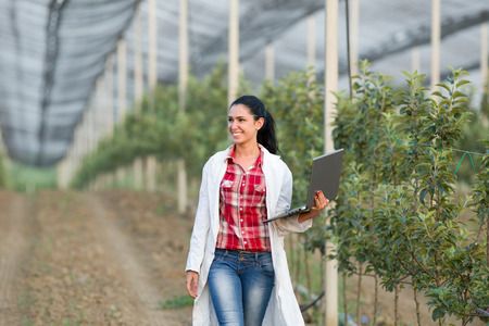 agronomist: Young woman agronomist with laptop walking beside apple trees in modern orchard with anti hail net
