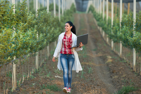 Young woman agronomist with laptop walking beside apple trees in modern orchard with anti hail net