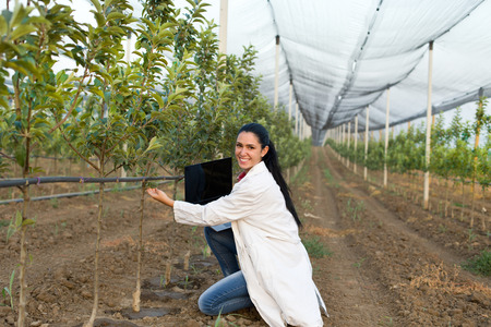 agronomist: Young woman agronomist with laptop standing beside apple tree in modern orchard with anti hail net