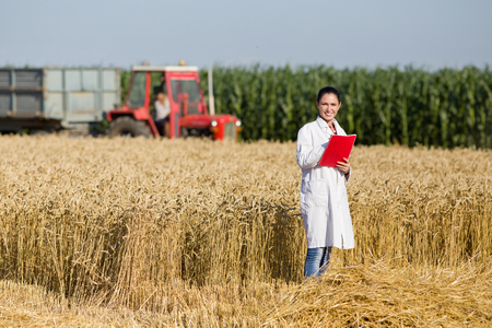 agronomist: Young woman agronomist standing in golden wheat field and writing notes. Tractor with trailer in background