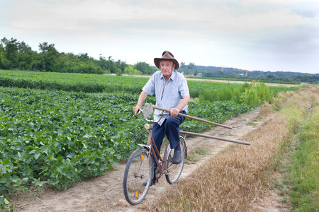 fertile land: Senior peasant riding a bicycle with hoe in hand in the fertile land Stock Photo