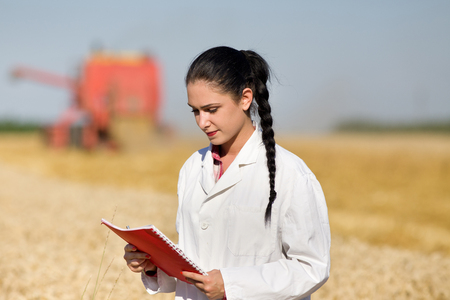 agronomist: Young woman agronomist standing in golden wheat field and reading notes from book. Combine harvester working in background