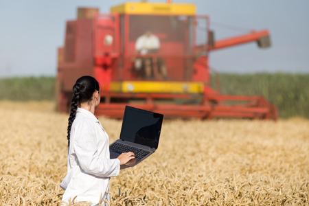 bata blanca: Agr�nomo joven mujer en bata blanca sosteniendo port�til en campo de trigo de oro durante la cosecha, se combinan en el fondo Foto de archivo