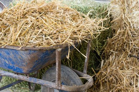 feed up: Close up of old wheelbarrow with dry straw for cattle feed