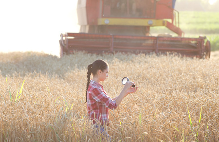 agronomist: Young woman agronomist looking at wheat ears with magnifier, combine harvester in background