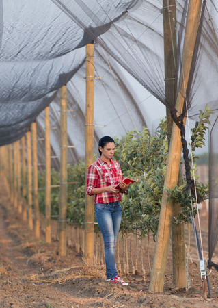 agronomist: Young woman agronomist standing beside apple trees in modern orchard with anti hail net