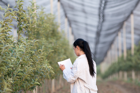 agronomist: Young woman agronomist writing notes beside apple trees in modern orchard with anti hail net