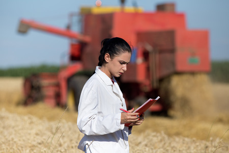 agronomist: Young woman agronomist standing in golden wheat field and reading notes. Combine harvester working in background Stock Photo