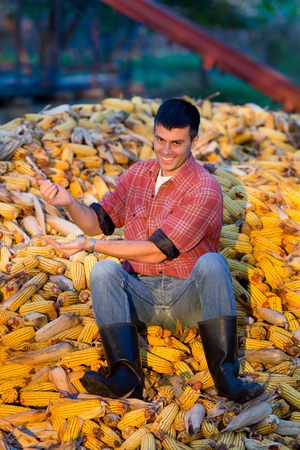 young farmer: Happy young farmer sitting on corn cobs pile on farm Stock Photo