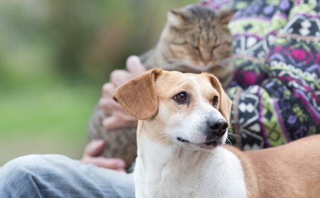 dog owner: Close up of cute dog standing on bench next to his owner who holding cat in the lap Stock Photo