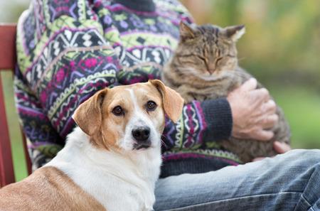 닫기 벤치에 서있는 귀여운 강아지의 위로 다음 그의 소유자에 무릎에 고양이를 들고있는 사람 스톡 콘텐츠