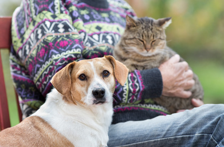 Close up of cute dog standing on bench next to his owner who holding cat in the lap Archivio Fotografico