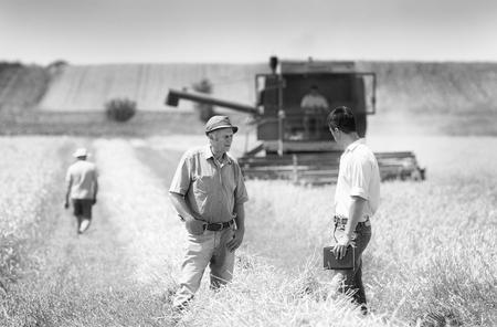 cosechadora: Imagen blanco y negro de los campesinos y de negocios hablando en campo de trigo durante la cosecha