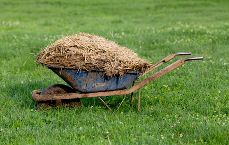 stock breeding: Wheelbarrow with natural cattle manure on the grass