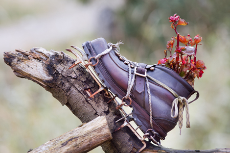 crampon: Garden decoration. Old winter shoe with crampons pinned in wooden femce with plant growing from it
