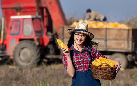 cereals holding hands: Young smiling girl with straw hat holding basket and showing corn to camera. Tractor with worker in trailer in background